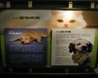 獸醫防疫技術資料館內照片-常見的寵物疾病