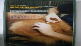 獸醫防疫技術資料館內照片-寵物注射的疫苗種類